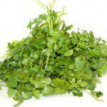 cilantro-benefits